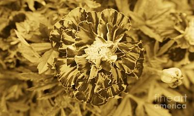 Photograph - Flowers Are Not Sepia For A Reason by Ron Bissett