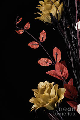 Flowers Arrangement With Black Background Art Print by Simon Bratt Photography LRPS
