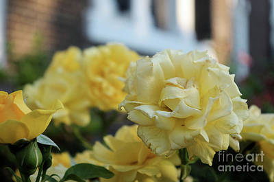 Photograph - Flowers At Christ Church by John S