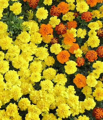 Farmers Market Photograph - Flowers At Farmers Market-3 by Janis Beauchamp