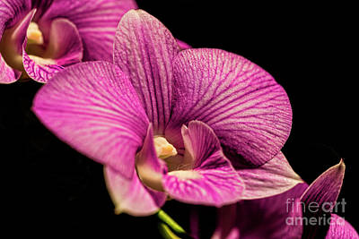 Photograph - Flowers At Leis Ginter 0325t by Doug Berry
