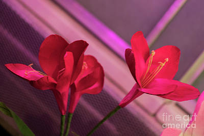Photograph - Flowers At Lewis Ginter 321 by Doug Berry