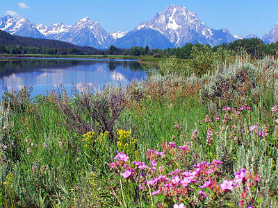 Flowers At Oxbow Bend Art Print