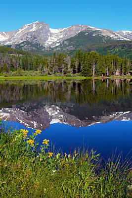 Reflection Photograph - Flowers At Sprague Lake by Shane Bechler
