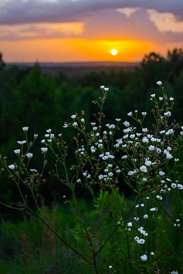 Photograph - Flowers At Sunset by Parker Cunningham