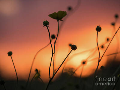 Flowers At Sunset Art Print