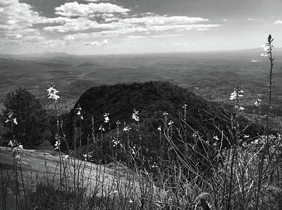 Photograph - Flowers At Table Rock Overlook In Black And White Four by Kelly Hazel