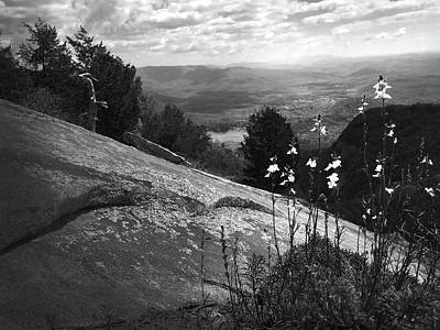 Photograph - Flowers At Table Rock Overlook In Black And White Three by Kelly Hazel