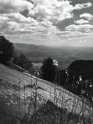 Photograph - Flowers At Table Rock Overlook In Black And White Two by Kelly Hazel