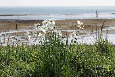 Photograph - Flowers At The Seashore by Linda Prewer