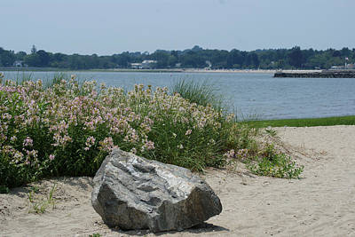 Photograph - Flowers At The Shore by Margie Avellino