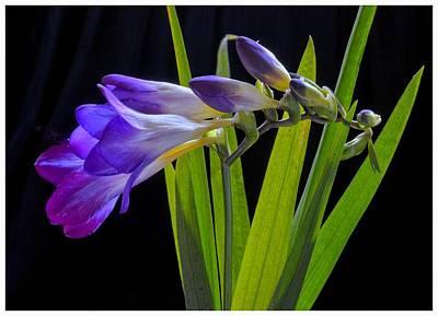 Flowers Backlite. Art Print