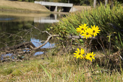 Photograph - Flowers By The Lake by Ricky Dean