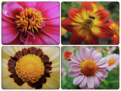 Photograph - Flowers by Chevy Fleet