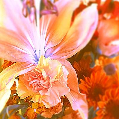 Photograph - Flowers Everyday 2 Warm Glow by Ellen Levinson