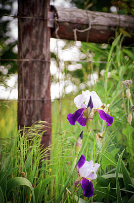 Photograph - Flowers, Fields And Fence Posts by Debbie Karnes