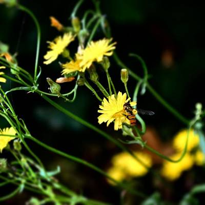 Botanical Photograph - #flowers #flower #tagsforlikes #petal by Jason Michael Roust