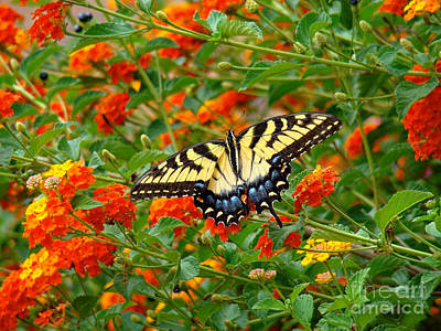 Flowers For Butterflies Art Print