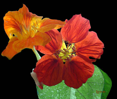 Flowers For Ebie Art Print by RC deWinter