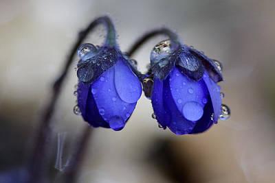 Flowers Fresh Rain Droplet Art Print by Romeo Koitmae