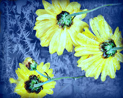 Photograph - Flowers Frozen In Time by Kathy M Krause