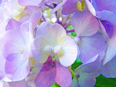 Flowers Hydrangeas Art Prints Floral Garden Baslee Troutman Art Print by Baslee Troutman