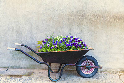 Photograph - Flowers In A Wheelbarrow by Jim Orr