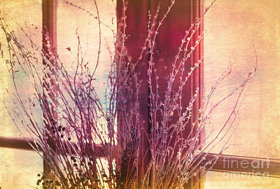 Photograph - Branches In A Window by Judi Bagwell