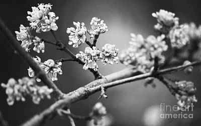 Photograph - Flowers In April Rain Black And White by Charline Xia
