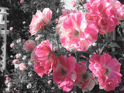 Pink Rose Bushes Digital Art - Flowers In Bloom by Shannon McMannus