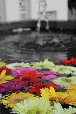 Photograph - Flowers In Fountain by Samantha Delory