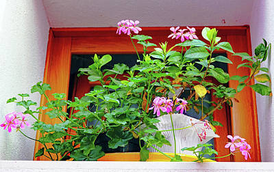 Photograph - Flowers In Front Of A Window On The Island Of Burano, Italy by Richard Rosenshein