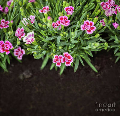 Fertilize Photograph - Flowers In Grass Growing From Natural Clean Soil by Michal Bednarek