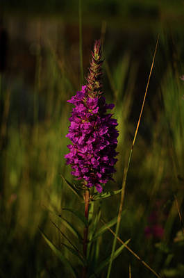 Photograph - Flowers In July by Miguel Winterpacht