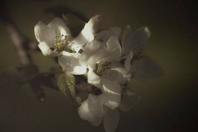 Photograph - Flowers In Light by Sherman Perry