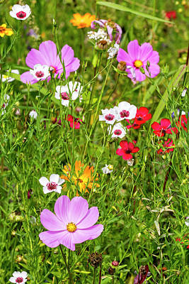Photograph - Flowers In Meadow by Arterra Picture Library