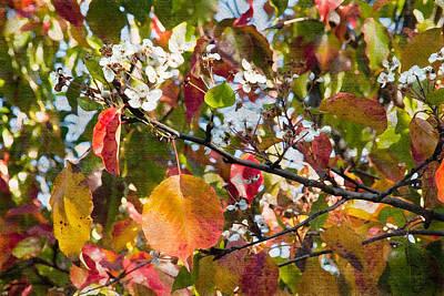 Flowers In Pear Tree Digital Art Art Print by Sherry  Curry