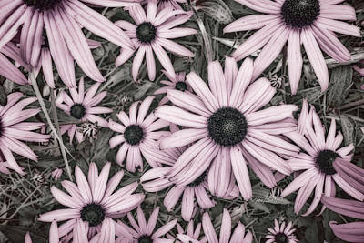 Photograph - Flowers In Pink - Photography by Ann Powell