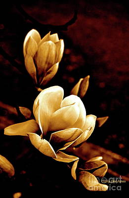 Photograph - Flowers In Sepia  by Cathy Dee Janes