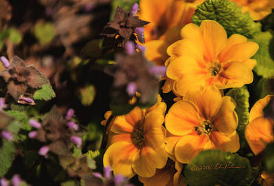 Photograph - Flowers In Spring by Edward Peterson