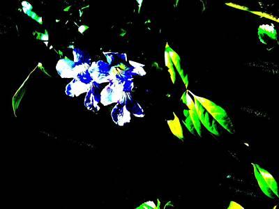Flowers In The Dark Art Print by Douglas Kriezel