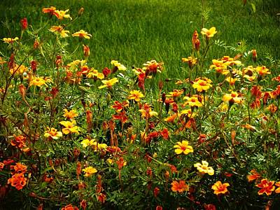 Photograph - Flowers In The Fields by Joseph Frank Baraba