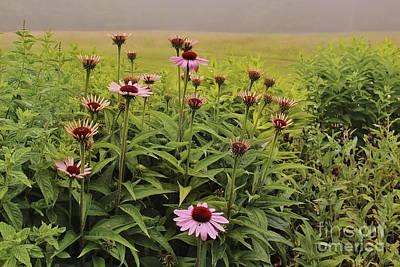 Flowers In The Fog Art Print