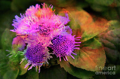 Photograph - Flowers In The Garden by Judi Bagwell