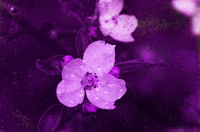 Digital Art - Purple Colored Apple Blossoms by Fine Art By Andrew David