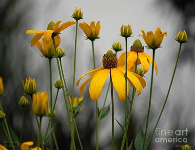 Cone Photograph - Flowers In The Rain by Robert Meanor