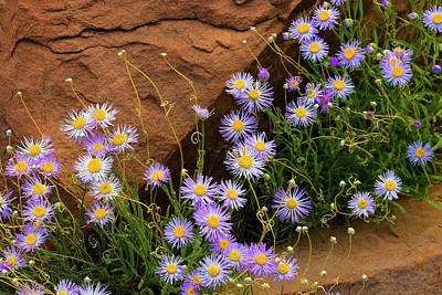 Photograph - Flowers In The Rocks by Darren White