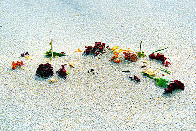Photograph - Flowers In The Sand by Eddy Mann
