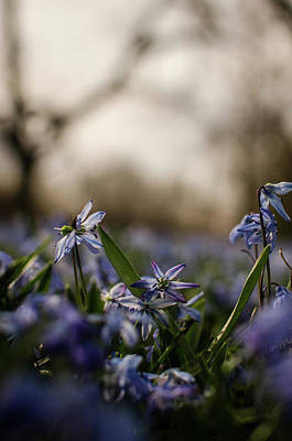 Photograph - Flowers In The Spring II by Miguel Winterpacht