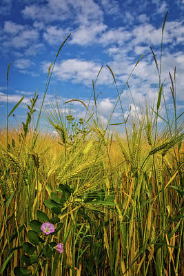 Photograph - Flowers In The Wheat by Debra and Dave Vanderlaan